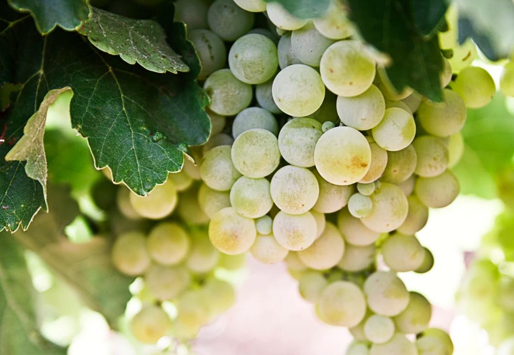 wine-banner3t6VvE1okhoif7